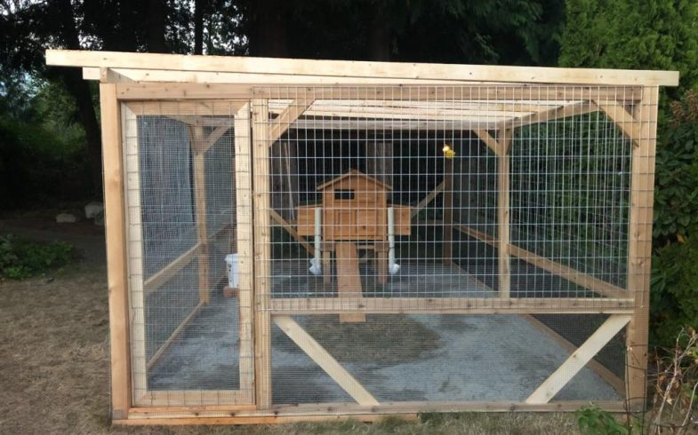 CHICKEN COOPS – Keep your chickens in and the predators out